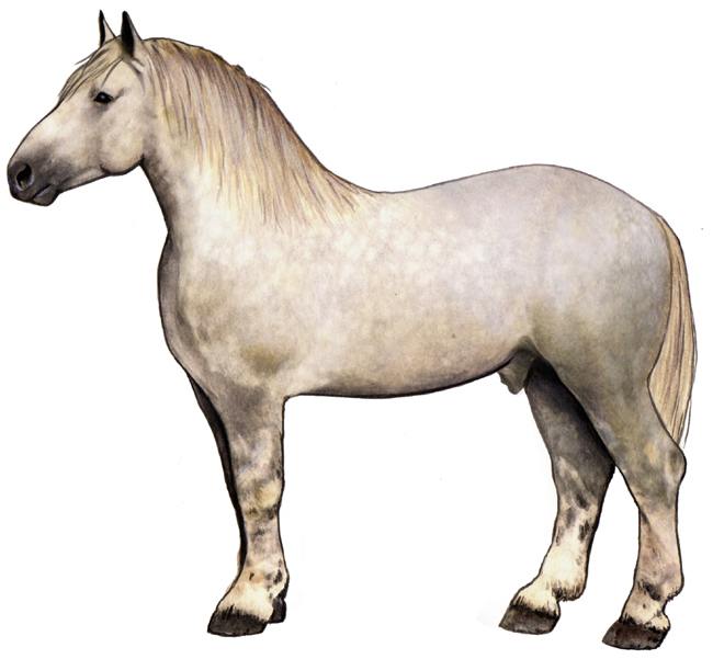 external image percheron_horse.jpg